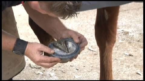How to shoe a racehorse