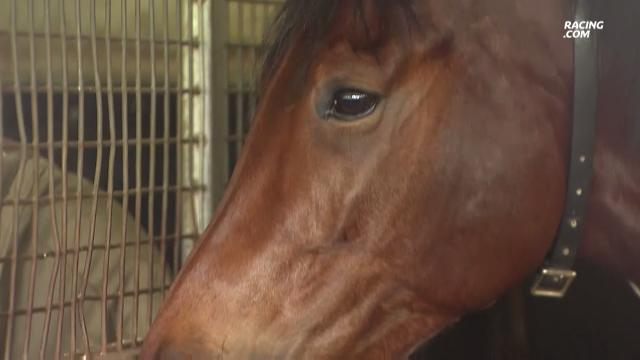 Almoonqith eyeing Melbourne Cup