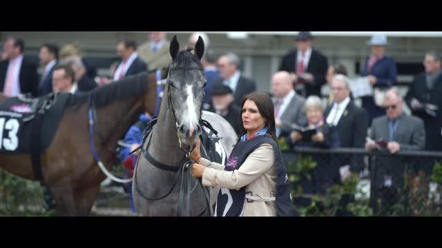 Routine of a Racehorse