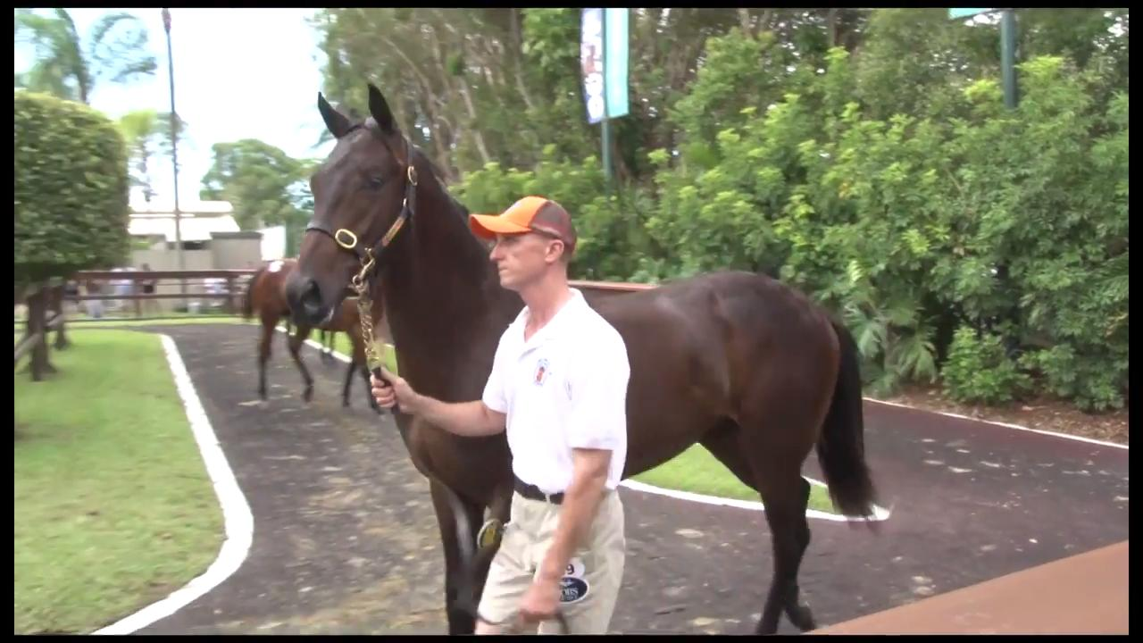 2017 Magic Millions day two wrap up