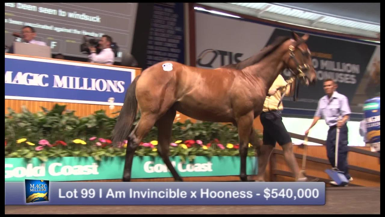 2017 Magic Millions Gold Coast Yearling Sale Day 4